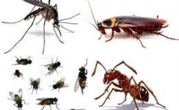 Những côn trùng muỗi gián, kiến và ruồi tuy nhỏ nhưng nó gây hại rất lớn