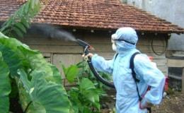 Bệnh sốt xuất huyết do muỗi
