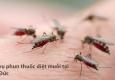 Phun thuốc muỗi Phú Xuyên – Hotline: 0989.782.883
