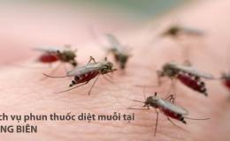 Phun thuốc muỗi Long Biên – Hotline: 0989.782.883