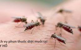 Phun thuốc muỗi Tây Hồ – Hotline: 0989.782.883
