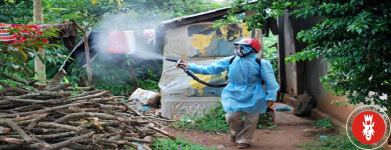 Dịch vụ phun muỗi, phun diệt moó và côn trùng